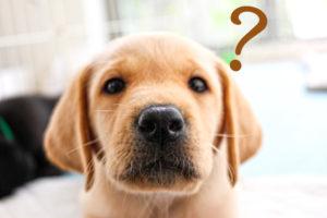疑問を抱いている犬の画像