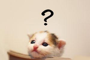 疑問を抱いている猫の画像